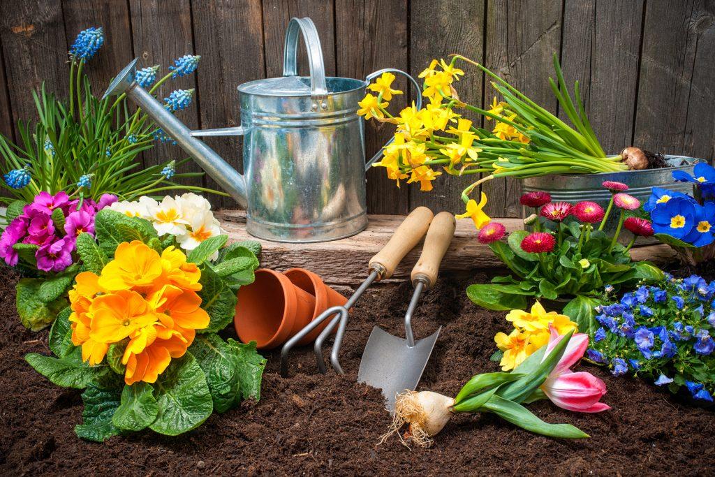 Когда в июне сажать цветы 243
