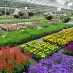 beding plants